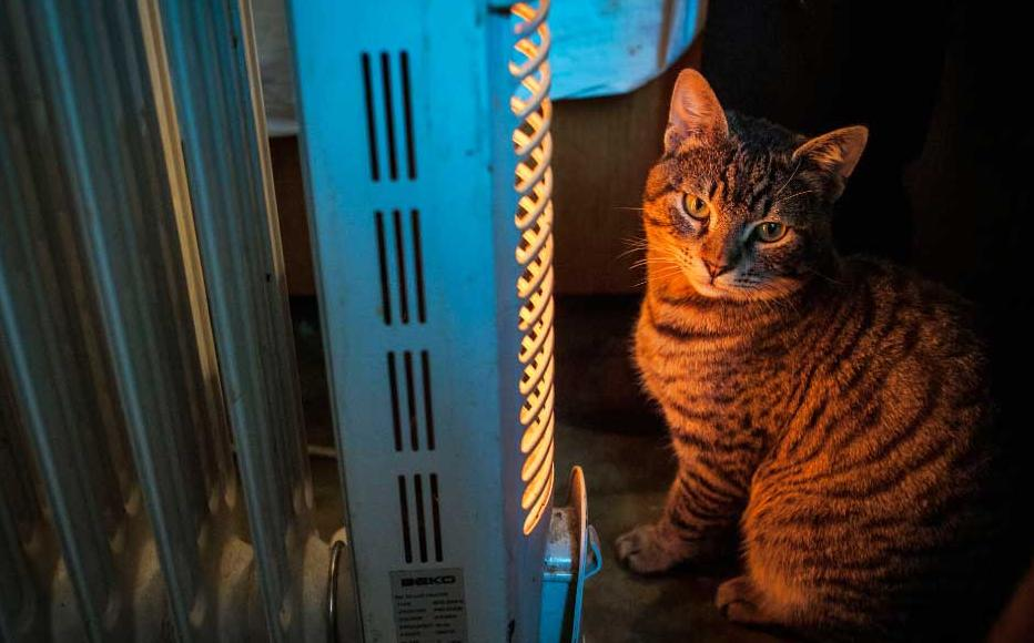 Gumburidze's cat sits by an electric heater – the rooms here are cold and draughty.