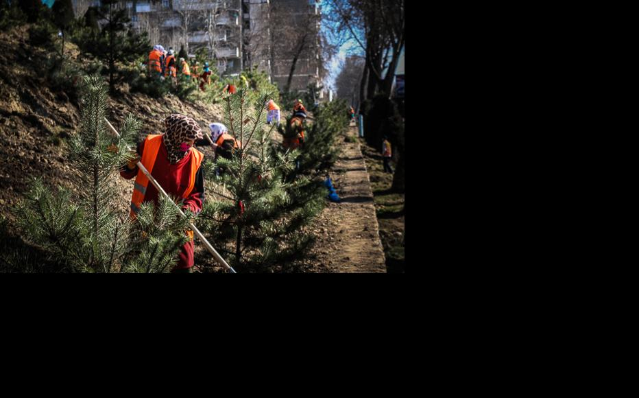 Women planting fir trees in Dushanbe. (Photo: Lidia Isamova)