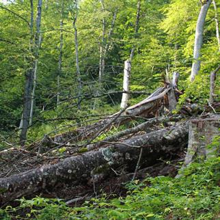Forests in Georgia are losing trees to loggers who supply villages with firewood. (Photo: CENN)