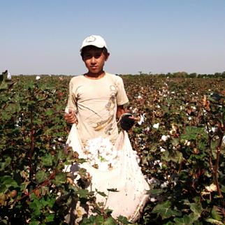 A sackful of cotton. Minors are set a quota of 50 kilograms a day. (Photo: IWPR)
